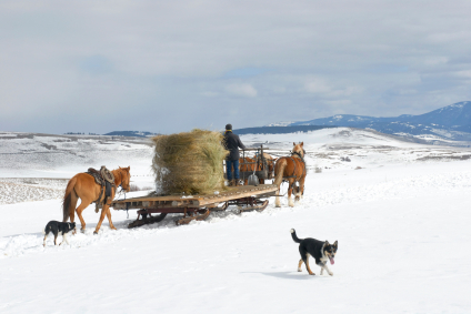 sled-moving-hay